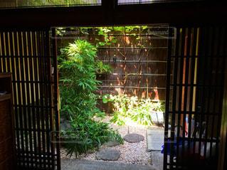 庭の写真・画像素材[605977]