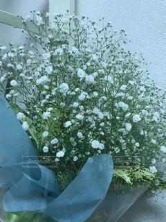 花の写真・画像素材[605253]