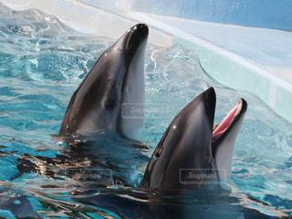 イルカの写真・画像素材[606770]
