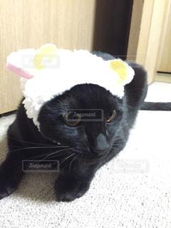 猫の写真・画像素材[605550]