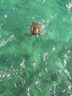 海の写真・画像素材[605581]