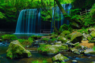 自然の写真・画像素材[605685]