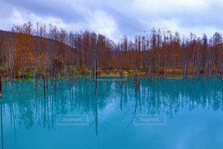 Blue pondの写真・画像素材[1666891]