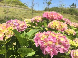 花の写真・画像素材[605770]