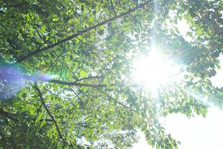 あたたかな日差しの写真・画像素材[768348]