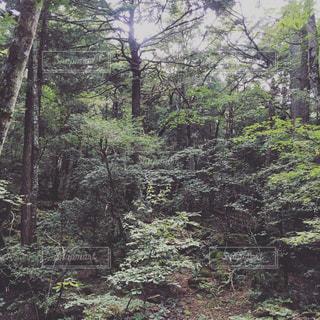 自然の写真・画像素材[621250]