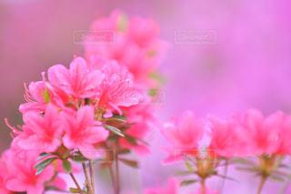 植物の上のピンクの花の写真・画像素材[3115569]