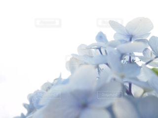 花の写真・画像素材[610051]