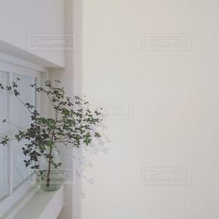 室内の木 - No.744399