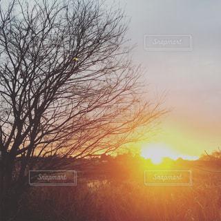 初日の出とツリーの写真・画像素材[1716405]