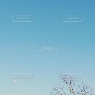 昼の月と木の写真・画像素材[1805659]