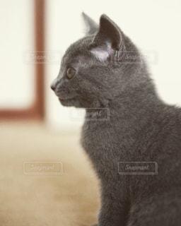 猫の写真・画像素材[606311]