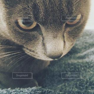 猫の写真・画像素材[606313]