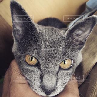 猫の写真・画像素材[606334]