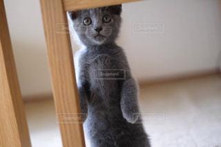 猫の写真・画像素材[606570]