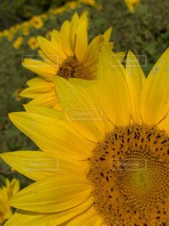 花の写真・画像素材[606907]