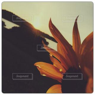 花の写真・画像素材[606987]