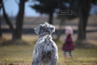 子供をながめる犬の写真・画像素材[1120586]