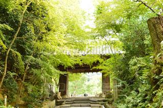 高台寺の写真・画像素材[760075]