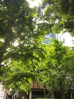 東京の写真・画像素材[606949]