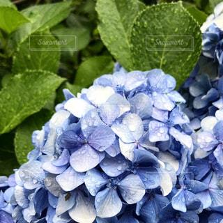 花の写真・画像素材[607005]