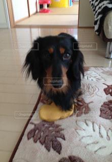 犬の写真・画像素材[607835]