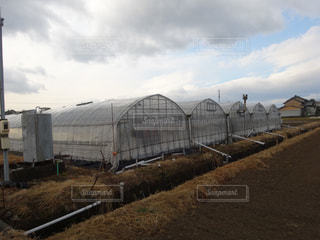 農業の写真・画像素材[607918]
