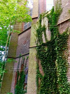緑 壁 ツタ 建物 美しい 自然 ヨーロッパ オランダ アムステルダム 旅行 癒し - No.612294