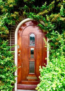 ドア 扉 緑 植物 お洒落な 暮らし 癒し インテリア ヨーロッパ オランダ アムステルダム 旅行の写真・画像素材[612347]
