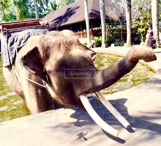 バリ島 観光地 象 水浴び 旅行 象 公園 晴れの写真・画像素材[630713]