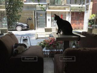 猫の写真・画像素材[611006]