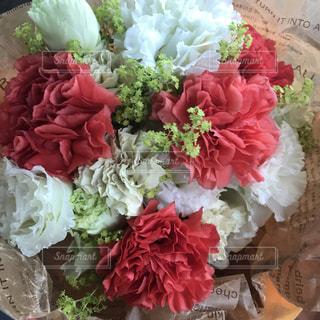花の写真・画像素材[608393]