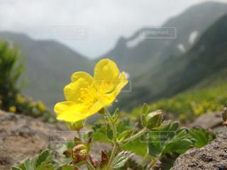 自然の写真・画像素材[608605]