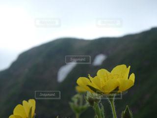 自然の写真・画像素材[608607]