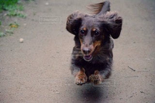 犬の写真・画像素材[17664]