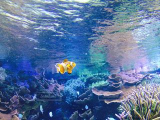 水中の写真・画像素材[609185]
