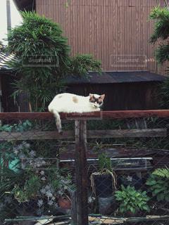 猫の写真・画像素材[609287]