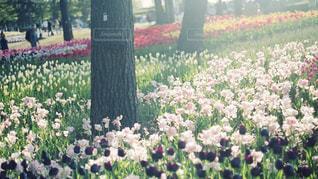 公園の写真・画像素材[609340]