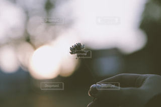手と花の写真・画像素材[1281935]