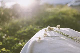 花を摘む少女の写真・画像素材[1659291]