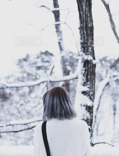 細雪の写真・画像素材[1699226]