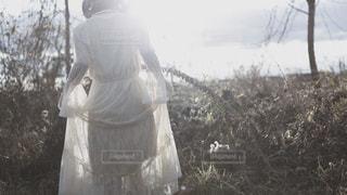 光となり、消えていくの写真・画像素材[1735262]