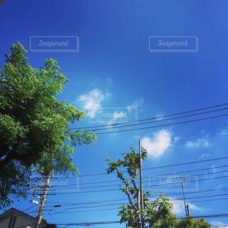 近くの木のアップの写真・画像素材[1300524]