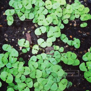 植物の写真・画像素材[615873]