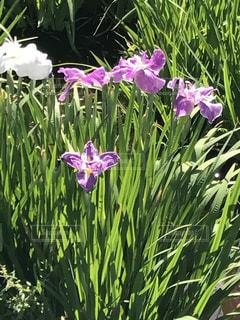花の写真・画像素材[609981]