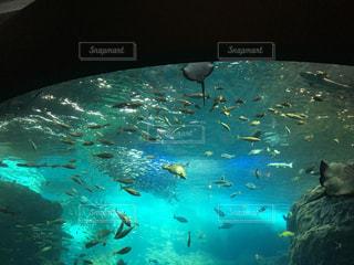 魚の写真・画像素材[610409]