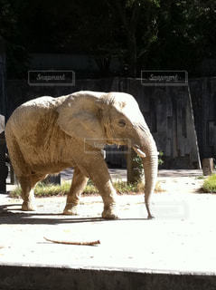 動物の写真・画像素材[610165]