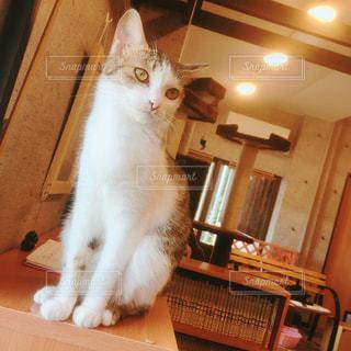 猫の写真・画像素材[614644]