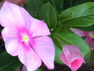 花の写真・画像素材[611250]