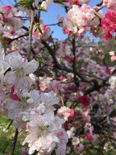花の写真・画像素材[611419]